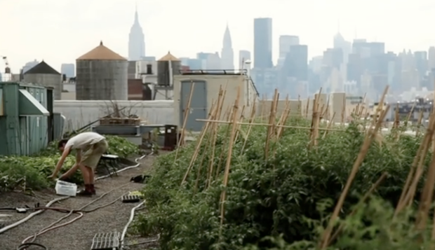 "Brooklyn Grange, le plus grand ""rooftop farm"" de la métropole"